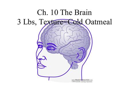 Ch. 10 The Brain 3 Lbs, Texture=Cold Oatmeal. What are the 4 Major Parts of the Brain? 1) Cerebral Hemispheres 2) Diencephalon 3) Brain Stem 4) Cerebellum.