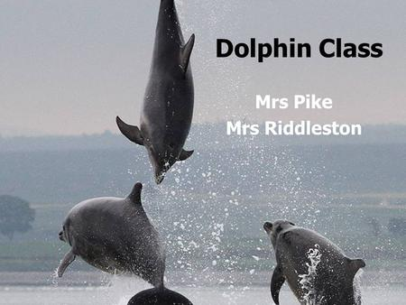 Dolphin Class Mrs Pike Mrs Riddleston. 8.55 10.30 B R E AK B R E AK 10.45 12.00 L U N C HL U N C H 1.00 3.15 MON MON SCHOOL ASSEMBLY MATHS ENGLISH PoR.