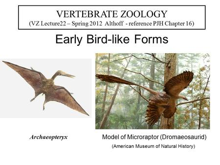 Early Bird-like Forms VERTEBRATE ZOOLOGY (VZ Lecture22 – Spring 2012 Althoff - reference PJH Chapter 16) Model of Microraptor (Dromaeosaurid) (American.