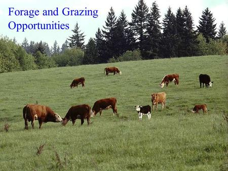 Forage and Grazing Opportunities. What Grazing Management and Golf have in common It's something you do outdoors Doing it well is more difficult then.