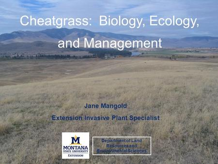 Cheatgrass: Biology, Ecology, and Management Jane Mangold Extension Invasive Plant Specialist Department of Land Resources and Environmental Sciences.