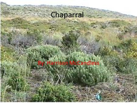 Chaparral By: Harrison McCandless. The Chaparral biome is found in four places in the world Mediterranean Basin (where it is known as maqius) central.