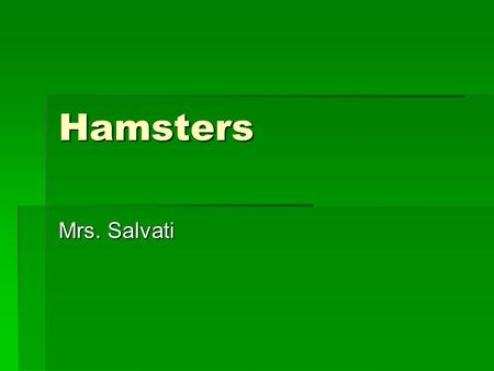 Hamsters Mrs. Salvati. Varieties  Golden (Syrian)  Brown on top, white on bottom Black stripe on back Syrian – Different colors Teddy Bear - Long haired.