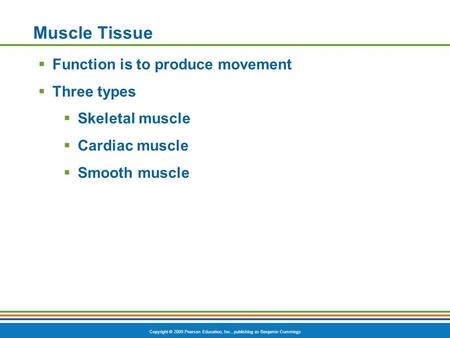Copyright © 2009 Pearson Education, Inc., publishing as Benjamin Cummings Muscle Tissue  Function is to produce movement  Three types  Skeletal muscle.