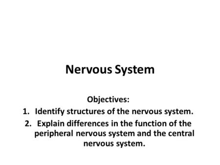 Nervous System Objectives: 1.Identify structures of the nervous system. 2.Explain differences in the function of the peripheral nervous system and the.