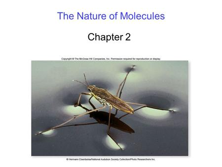 The Nature of Molecules Chapter 2. 2 Atomic Structure All matter is composed of atoms. Understanding the structure of atoms is critical to understanding.