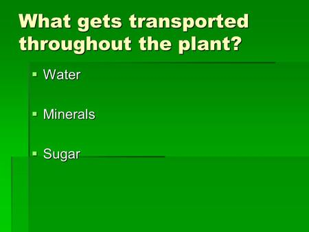 What gets transported throughout the plant?  Water  Minerals  Sugar.