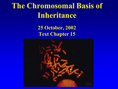 The Chromosomal Basis of Inheritance 25 October, 2002 Text Chapter 15.