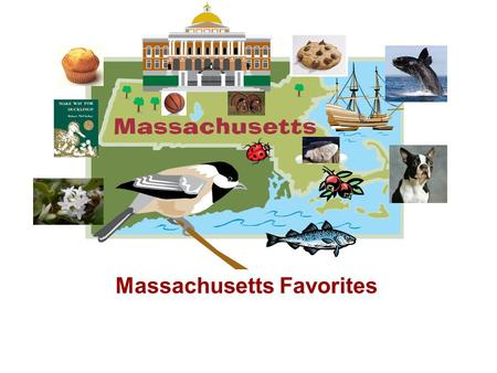 Massachusetts Favorites. Basketball Basketball was adopted as the state sport in 2006. In 1891, in Springfield, MA, Dr. James Naismith founded the game.