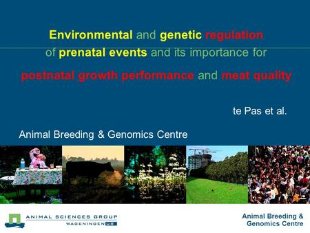 Animal Breeding & Genomics Centre Environmental and genetic regulation of prenatal events and its importance for postnatal growth performance and meat.