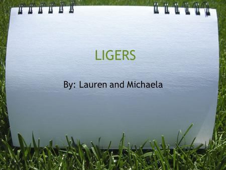 LIGERS By: Lauren and Michaela. What Are Ligers? Ligers are animals from the breeding of a male lion and a female tiger.This combination is a great result.