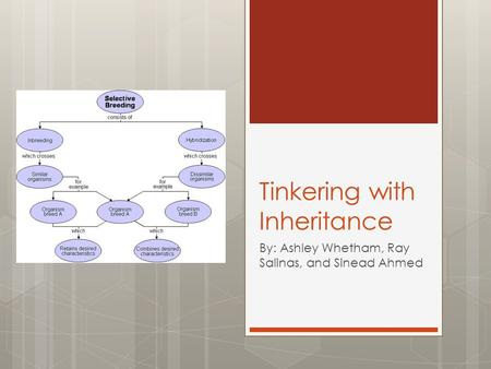 Tinkering with Inheritance By: Ashley Whetham, Ray Salinas, and Sinead Ahmed.