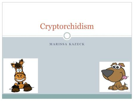 MARISSA KAZECK Cryptorchidism. What is cryptorchidism? A condition in which one (unilateral) or both (bilateral) testicles are retained either in the.