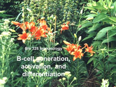 Bio 328 Immunology B-cell generation, activation, and differentiation.