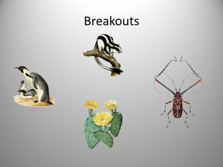 Breakouts. Penguins: Skunks: Cacti: Beetles: Classroom A - Suzanne Classroom C - Chris Lecture Hall 2 - Connie Ward Lecture Hall - Marie (Theme: Content.