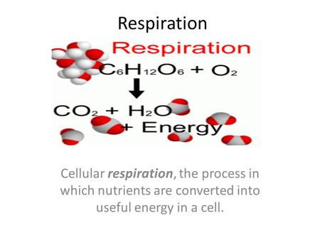 Respiration Cellular respiration, the process in which nutrients are converted into useful energy in a cell.
