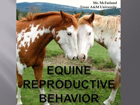 Mr. McFarland Texas A&M University.  Answer the questions below about these categories: Breeding season Reproductive behavior  What do you know?  What.