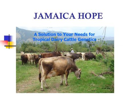 JAMAICA HOPE A Solution to Your Needs for Tropical Dairy Cattle Genetics 13-08-2008.