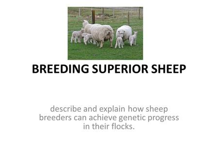 BREEDING SUPERIOR SHEEP describe and explain how sheep breeders can achieve genetic progress in their flocks.