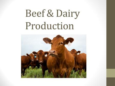 Beef & Dairy Production. How to decide?? Type of production varies greatly. Depends on: type of animals Location Facilities overall producer goals In.