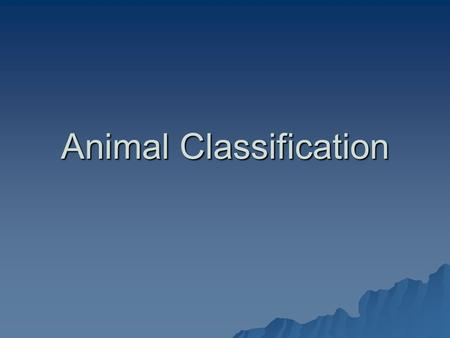 Animal Classification. Animals  Animals are spilt into two major groups:  Vertebrates  Invertebrates.