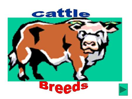 How many of you love to eat cheese, meat, ice cream or drink milk? Did you ever wonder where these products came from?