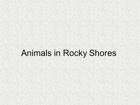 Animals in Rocky Shores. Rocky Shores consist of 3 main parts The rock crevices in the splash zone and the upper shore of the littoral zone The middle.