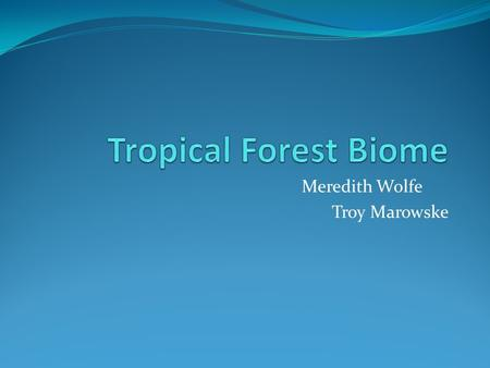 Meredith Wolfe Troy Marowske. Climate The rain forests have a very steady warm and moist climate, due to there location near the equator. The average.