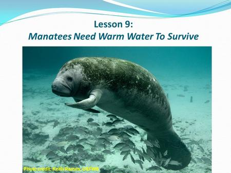 Lesson 9: Manatees Need Warm Water To Survive myakkariver.net Photo credit: Keith Ramos, USFWS.