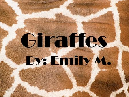 Giraffes By: Emily M. Physical Characteristics  Giraffes are 14 to 17 feet tall when they are grown.  Their tongues are black with a sandpaper texture.
