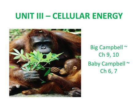 UNIT III – CELLULAR ENERGY Big Campbell ~ Ch 9, 10 Baby Campbell ~ Ch 6, 7.
