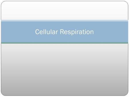 Cellular Respiration. Cellular respiration – process in which mitochondria break down food molecules to produce ATP in plants & animals; occurs in the.