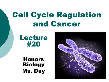 Cell Cycle Regulation and Cancer Lecture #20 Honors Biology Ms. Day.