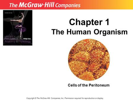 Copyright © The McGraw-Hill Companies, Inc. Permission required for reproduction or display. Chapter 1 The Human Organism Cells of the Peritoneum.