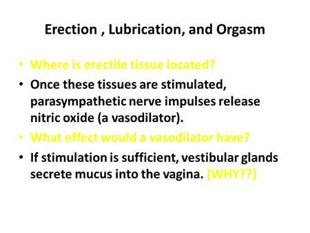 Erection, Lubrication, and Orgasm Where is erectile tissue located? Once these tissues are stimulated, parasympathetic nerve impulses release nitric oxide.