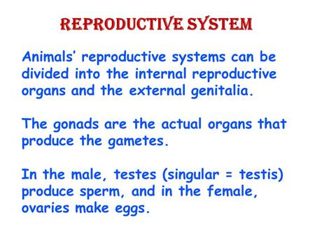 Reproductive System Animals' reproductive systems can be divided into the internal reproductive organs and the external genitalia. The gonads are the actual.