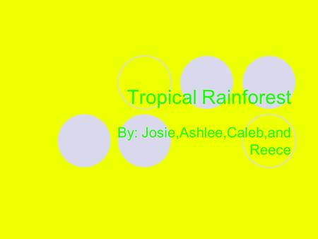 Tropical Rainforest By: Josie,Ashlee,Caleb,and Reece.