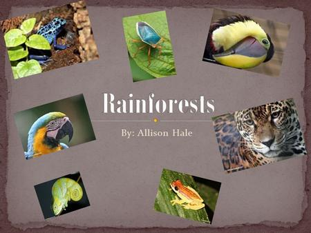 By: Allison Hale. Biomes are ecosystems that have certain plants and animals that live in that certain spot. Here are some biomes, Rainforest, Taiga,