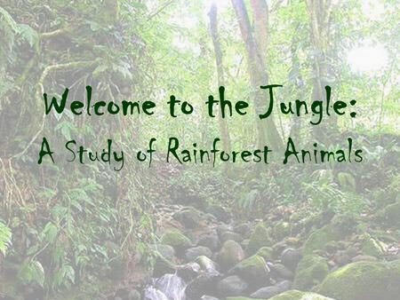 Welcome to the Jungle: A Study of Rainforest Animals.
