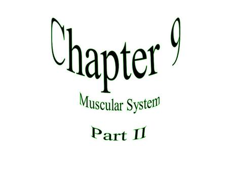 Chapter 9 Muscular System Part II.