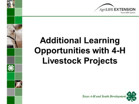 Additional Learning Opportunities with 4-H Livestock Projects Texas 4-H and Youth Development.