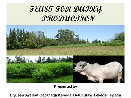FEAST FOR DAIRY PRODUCTION Presented by Liyusew Ayalew, Gezahegn Kebede, Getu Kitaw, Fekede Feyissa.