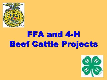 FFA and 4-H Beef Cattle Projects. What am I looking for? Where do I start? What factors should be taken into consideration?
