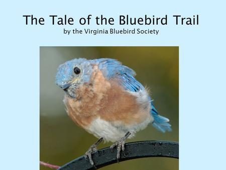 The Tale of the Bluebird Trail by the Virginia Bluebird Society.