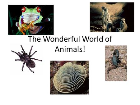 The Wonderful World of Animals!. What is true about ALL animals? They are eukaryotic They are multicellular They are heterotrophs (If they make their.