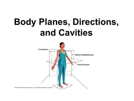 Body Planes, Directions, and Cavities. Body Planes There are three body planes : a)Transverse (Horizontal)- divides the body into a Top and bottom. b)Sagittal.