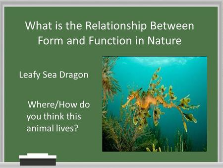 What is the Relationship Between Form and Function in Nature