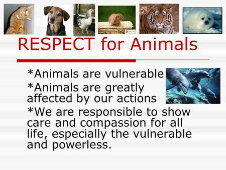 RESPECT for Animals *Animals are vulnerable *Animals are greatly affected by our actions *We are responsible to show care and compassion for all life,