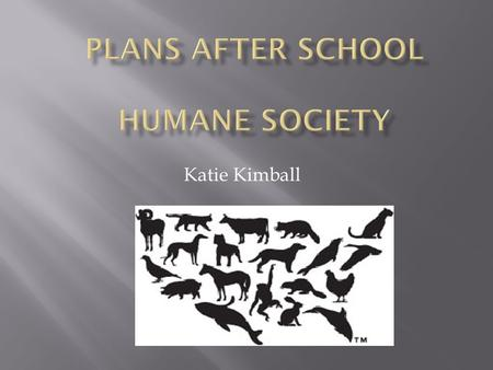 Katie Kimball.  Welcome every animal in need  Only declines animals if no space  2009  Began tracking how many animals took, adopted, and euthanized.