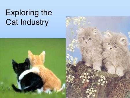 Exploring the Cat Industry. Student Learning Objectives Describe the biology and physiology of a cat. Explain classes and breeds of cats. Identify management,